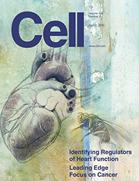 Cell - A global in vivo Drosophila RNAi screen identifies NOT3 as a conserved regulator of heart function.