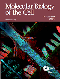 Molecular Biology of the Cell - Myosin transducer mutations differentially affect motor function, myofibril structure, and the performance of skeletal and cardiac muscles.