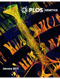PLoS Genetics - A Drosophila model of high sugar diet-induced cardiomyopathy.