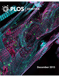 PLoS Genetics - Huntington's Disease Induced Cardiac Amyloidosis Is Reversed by Modulating Protein Folding and Oxidative Stress Pathways in the Drosophila Heart.
