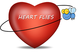 Heart Effect Analysis Research Team conducting Fly Investigations and Experiments in Spaceflight